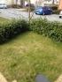 My front garden (aka front yard)