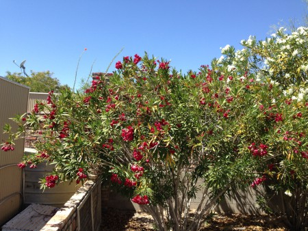 Life in the Real Desert: Flowers andRecovery